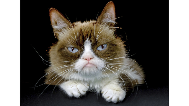 Grumpy Cat Death_1558099514721