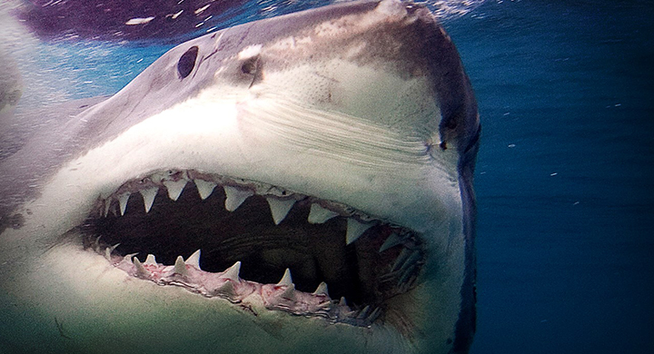 shark_1559605947361.jpg