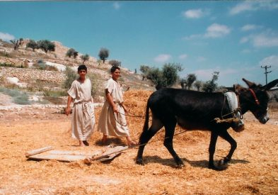 Two boys with a threshing sled. The threshing sled separated the wheat from its outer protective covering.