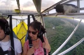 Γάτα λαθρεπιβάτης σε αεροσκάφος