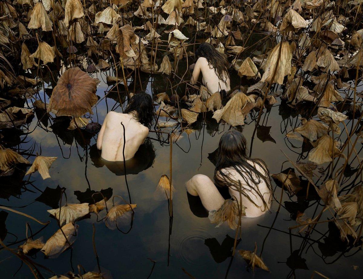 Sacred Lotus (Nelumbo nucifera) in Autumn 2017, Tamara Dean.