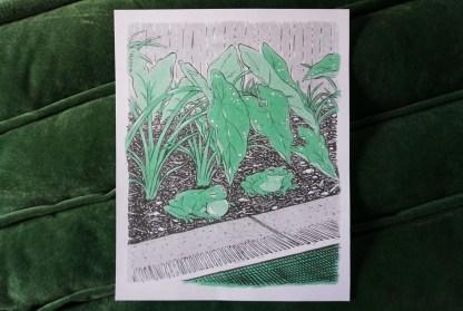 Frogs under elephant ear plants