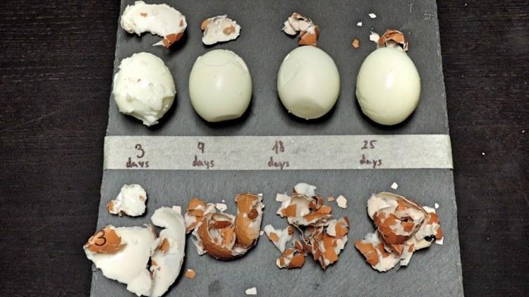 fresh eggs on egg fast
