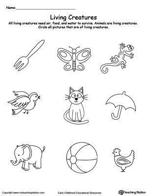 tree diagram worksheets grade 4 pa setup preschool plants and animals printable | myteachingstation.com