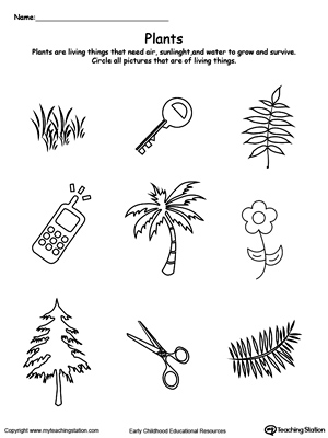 Kindergarten Plants and Animals Printable Worksheets