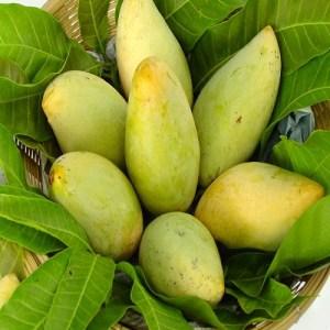 Chaunsa Mango Fruit Pakistan