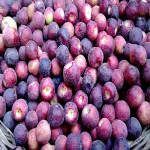 Falsa Price in Pakistan