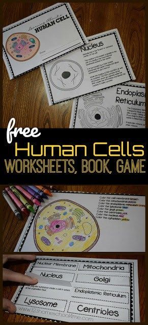 Human Cells for Kids Reader Worksheets Games