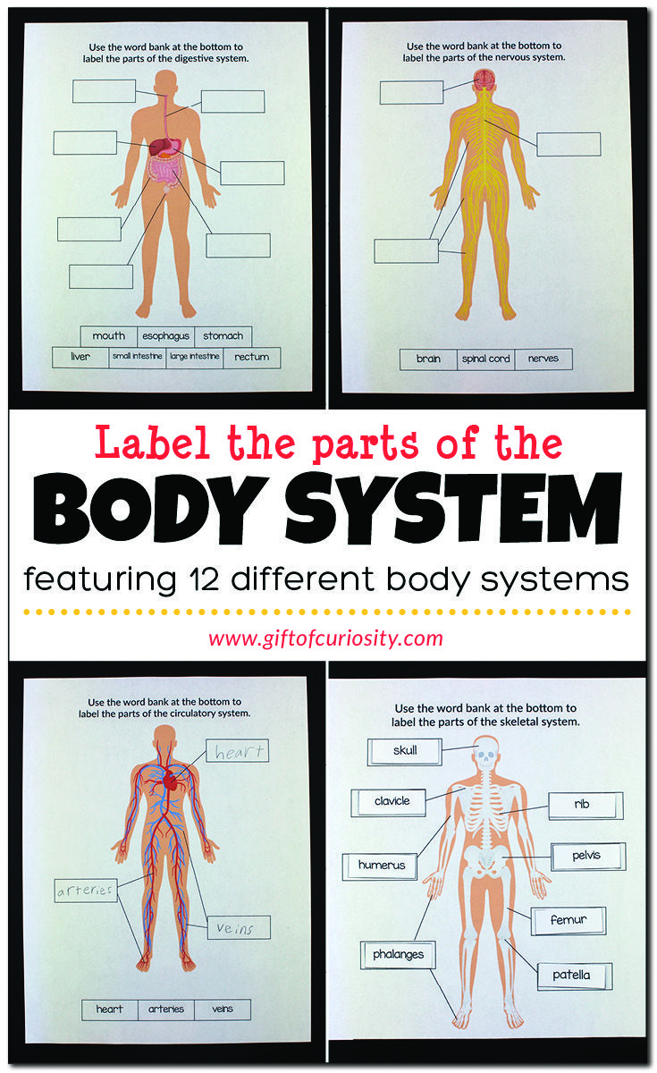 Label the Parts of the Body System