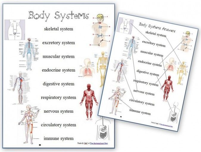 FREE Human Body Systems Worksheets Homeschool Giveaways
