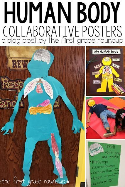 Human Body Life Size Posters