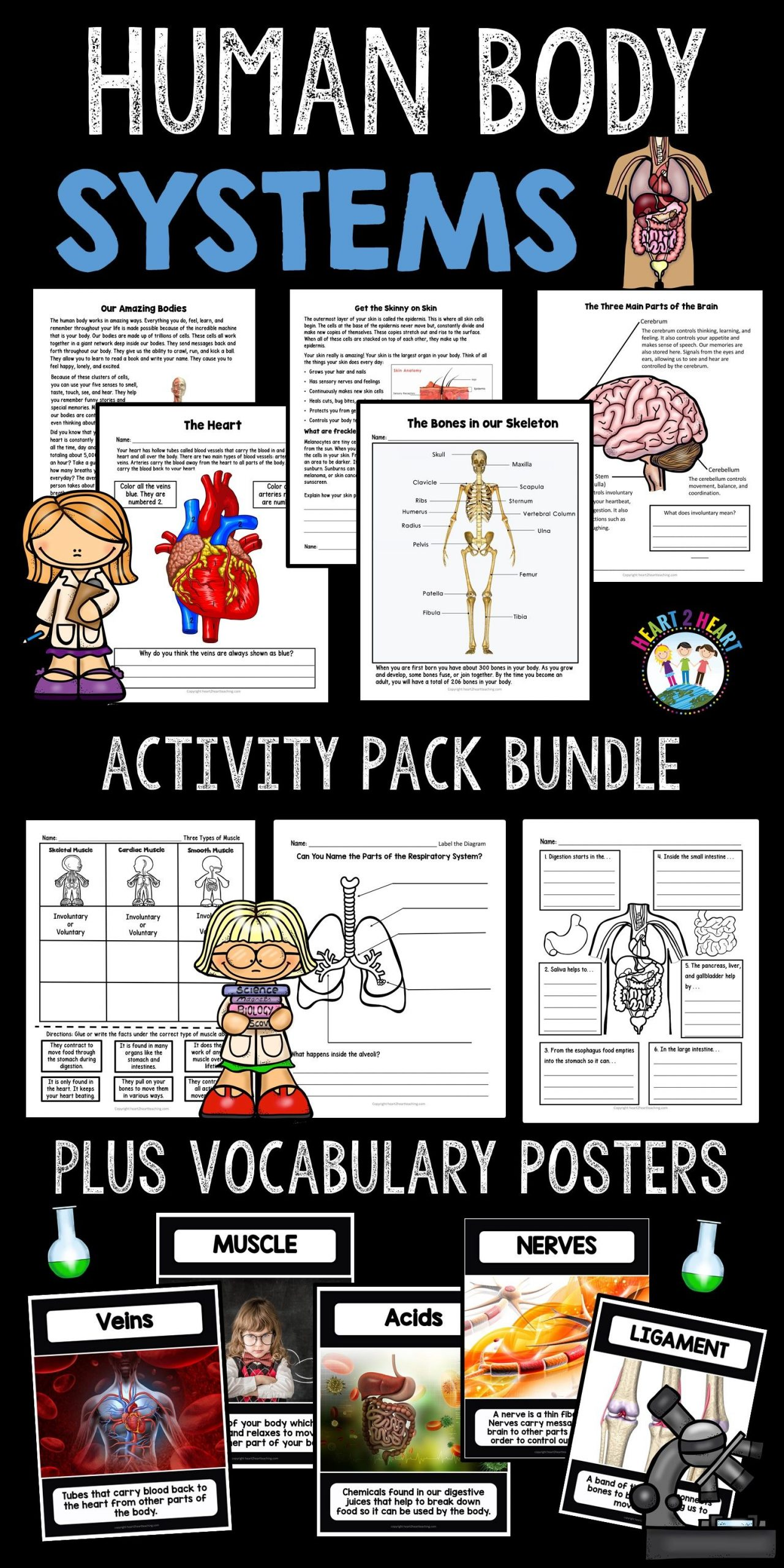 Human Body Worksheets For 3rd Grade Of Human Body Systems