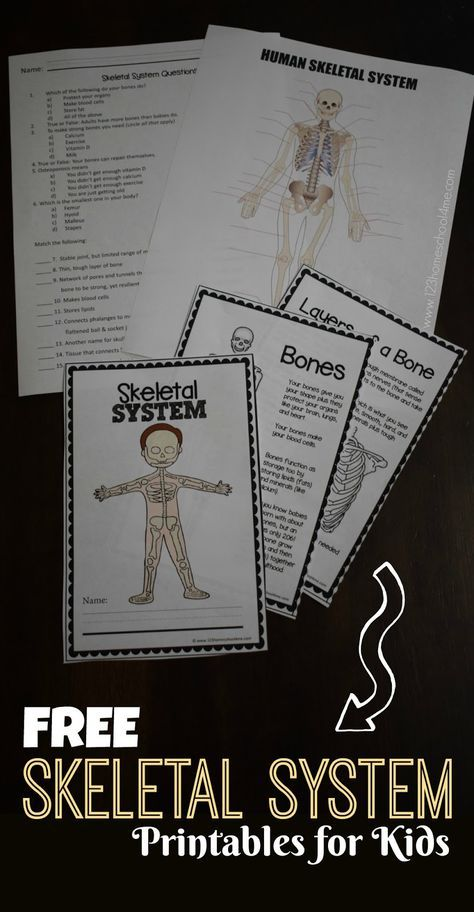 FREE Skeletal System Worksheet s