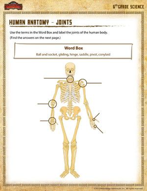 Human Anatomy Joints – 6th Grade Science Worksheets