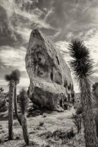 Ship Of The Desert by Bill Dahl