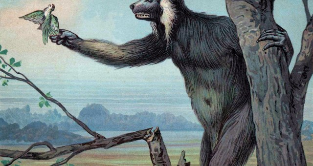Megaladapis Madagascariensis, cropped