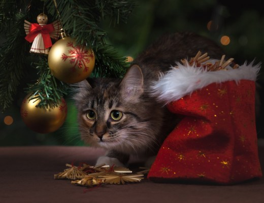 a grey tabby cat sat under a Christmas tree next to a sack of presents
