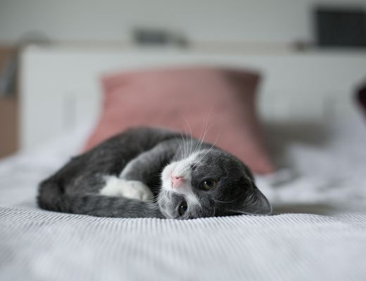 a grey kitten curled up on a bed