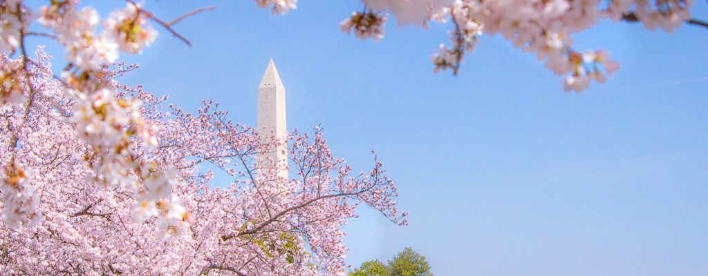 Where To See Cherry Blossoms In Washington Dc Most Photographed