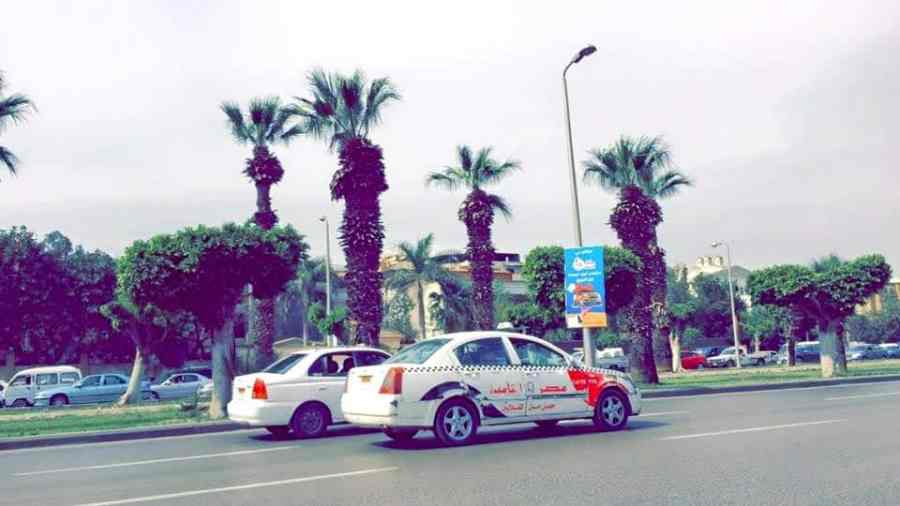 Palm Trees are one of the Pictures That Will Make You Want To Visit Cairo
