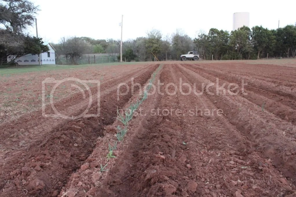 Back Gt Images For Gt Bean Germination Diagram