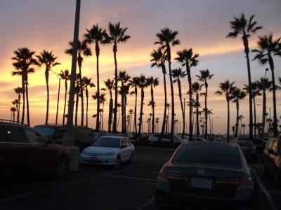 Whale Watching in Newport Beach California
