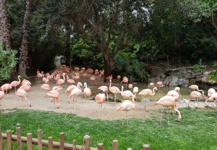 Warum sind Flamingos pink