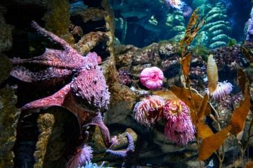 Ruddy The Octopus