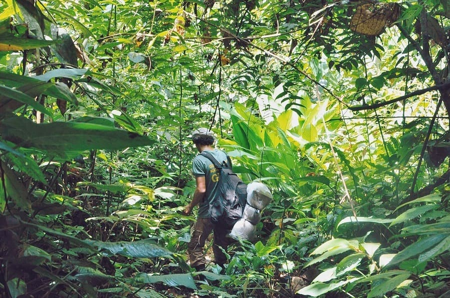 Jungle Trekking Sumatra