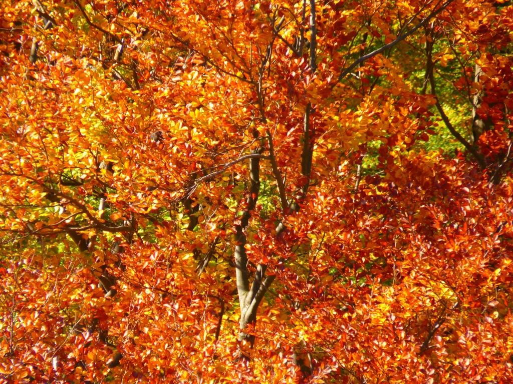 Faggeta autunno riserva naturale