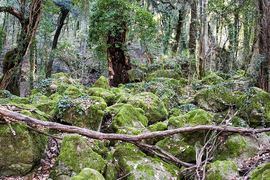 bosco del Sasseto