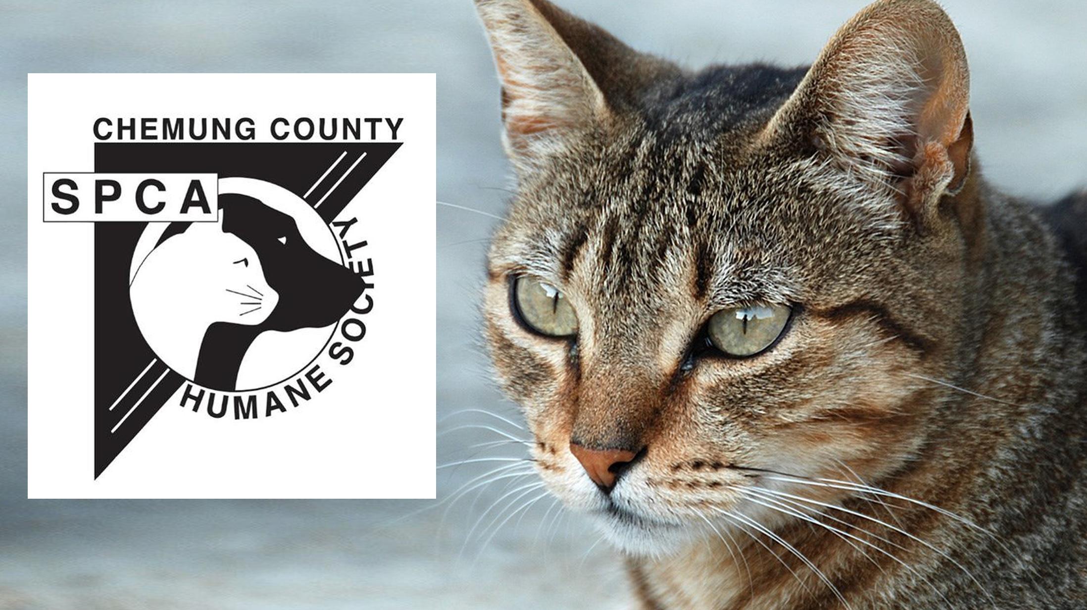 SPCA Cats_1450395784009.jpg