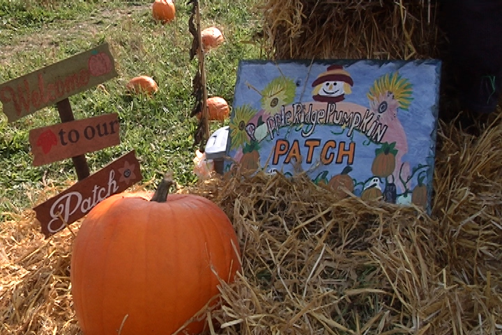 pumpkin patch web_1508701791619.jpg