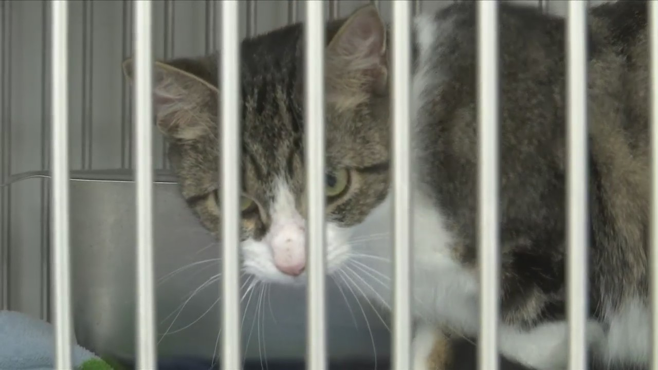 Chemung County SPCA Slashes Adoption Prices in Half for Earth Day