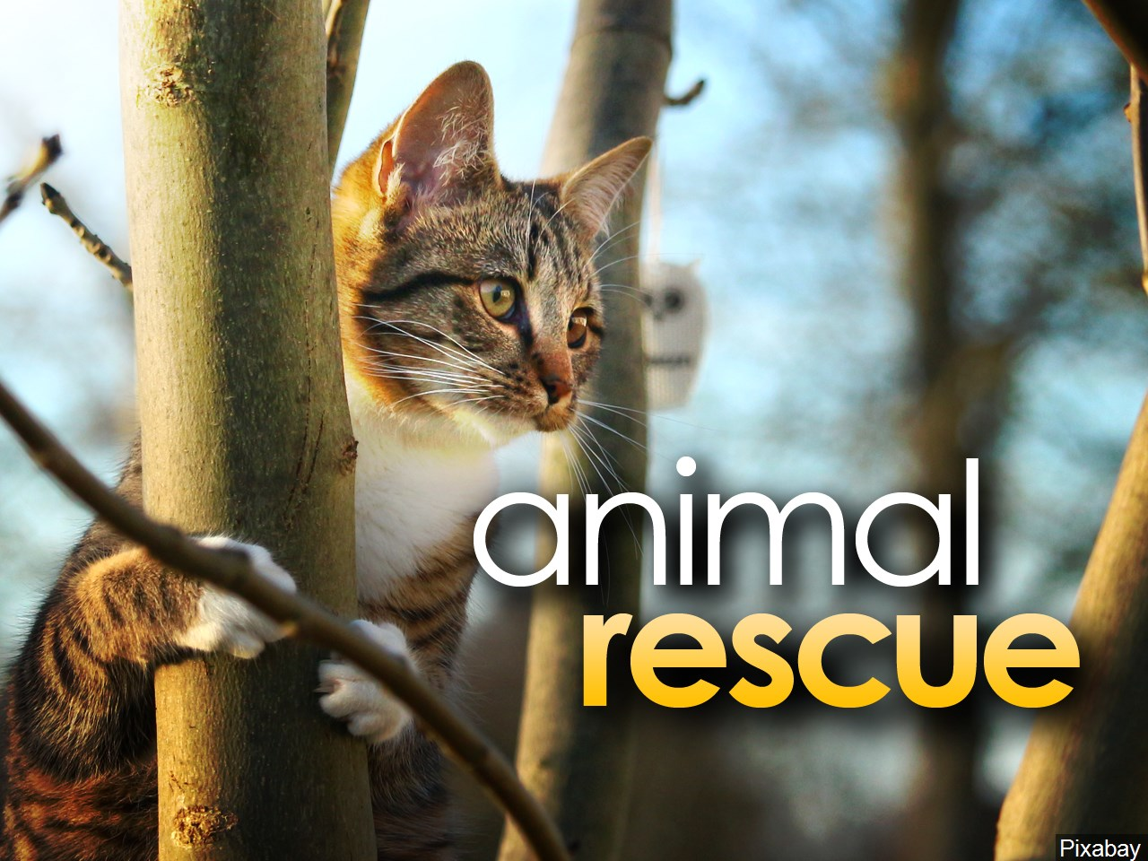 CNY animal shelter working to take care of 100 cats rescued