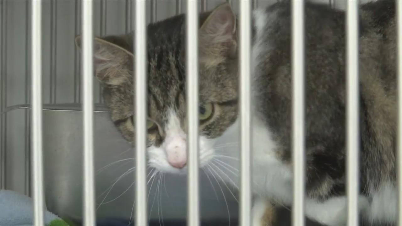 Chemung_County_SPCA_Slashes_Adoption_Pri_0_20180420212130