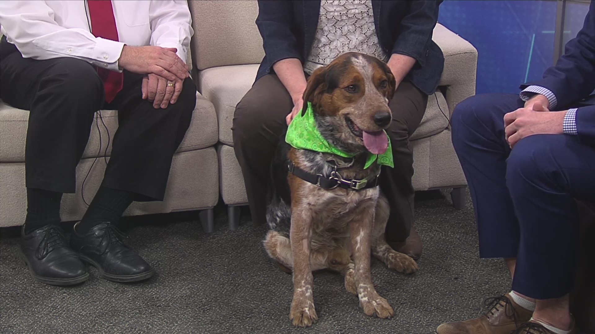Pet of the Week 3/11/19: Topaz