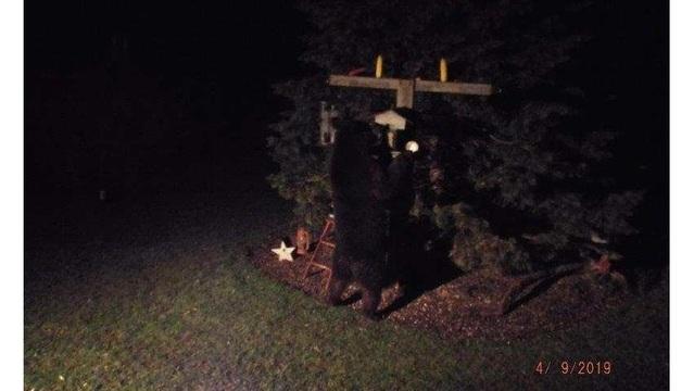 black bear palmyra_1554838146880.jpg_81421498_ver1.0_640_360_1554848623004.jpg.jpg