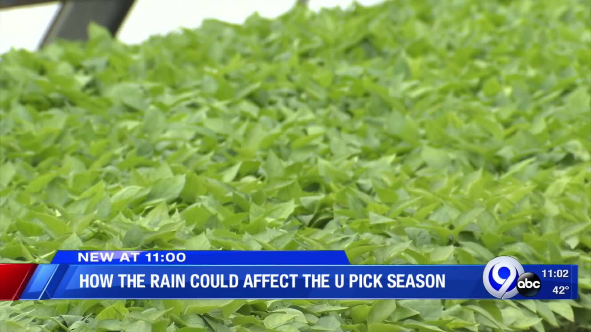 How_the_rain_could_affect_the_U_Pick_sea_8_20190514031002-118809342