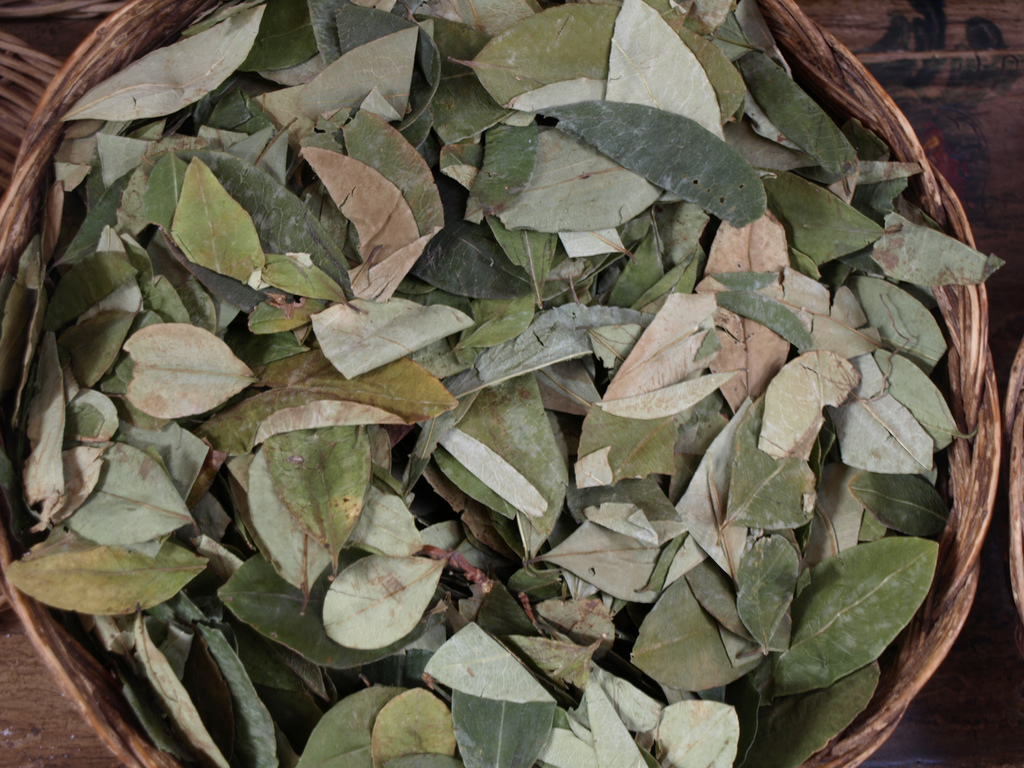 coca leaves, peru, andes, latin america, cocaine, herbal, tea