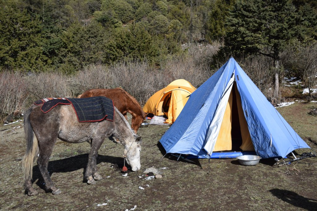 Camping, tents, Bhutan, Druk Path