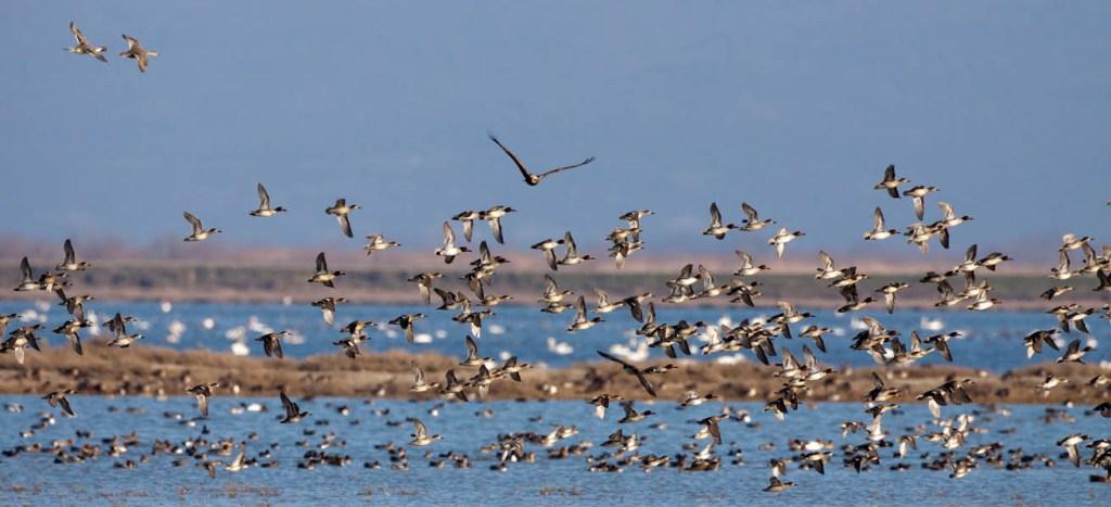 evros delta, Thrace, Greece, birds, birdwatching, ecosystem, biodiversity