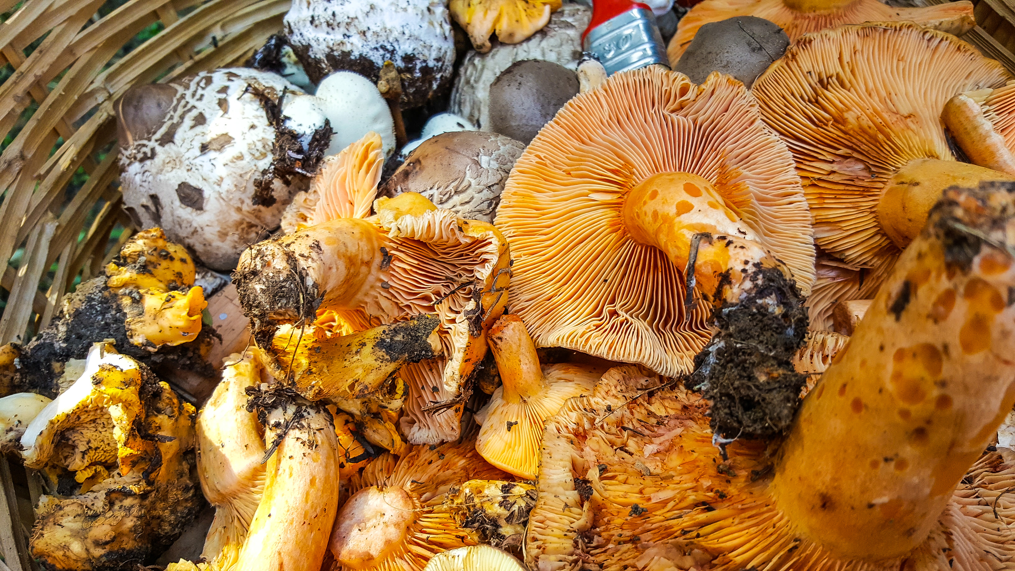 Greece, basket, abundance, yellow, autumn, colors, mushrooms