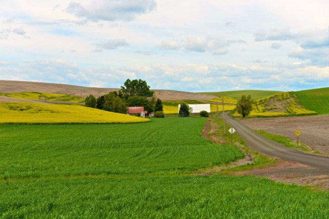 In the Palouse I