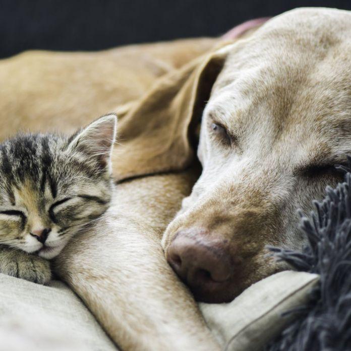 Aidez-nous à mener à bien nos missions ! La SPA vit principalement de la générosité du public et compte donc sur votre soutien pour secourir, défendre et protéger les animaux.