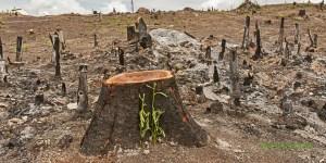 Et si on adoptait une forêt en danger ?
