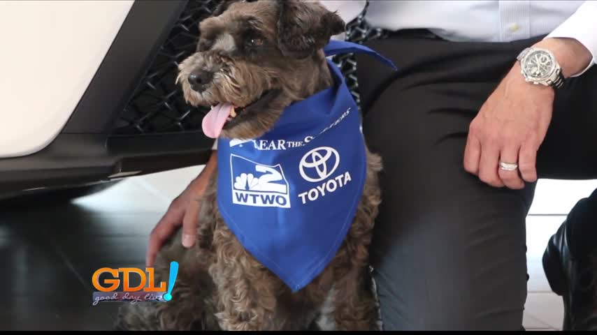 toyota clear the shelters