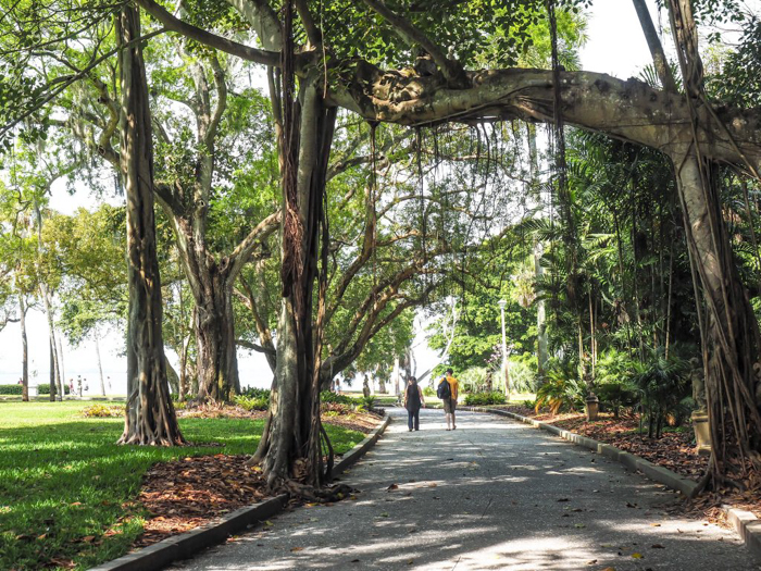 The Ringling // Getting My Italy Fix in Florida   Ringling   Ringling art museum and sculpture garden   Sarasota, Florida   The Ringling art museum   Palm Trees   Tree path