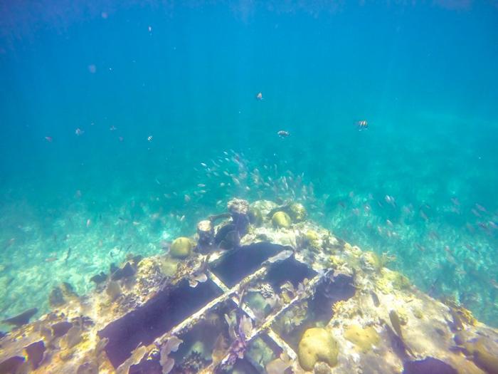 Snorkeling | Belize | Snorkeling in Belize with Caye Caulker's Caveman Snorkeling Tours