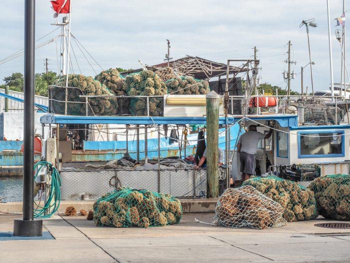 Incoming haul at the Sponge Docks in Tarpon Springs, Florida